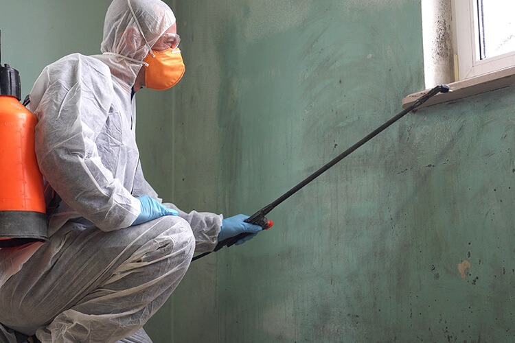 Mold removal waterloo